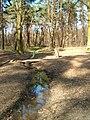Potok Bielański w Lasku Lindego na wiosnę.jpg