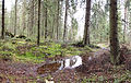 Puddle in forest.jpg