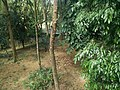 Putrajaya Botanical Garden in Malaysia 15.jpg