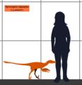 Pyroraptor SIZE.png