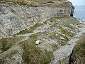 Quarry spoil at Dancing Ledge - geograph.org.uk - 1625724.jpg