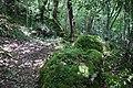 RNR Bois des Roches-4 (36).jpg