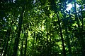 Rainforest - Flickr - tauntingpanda.jpg
