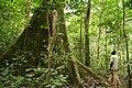 Rainforest Gabon.jpg