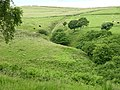 Ravine near Fox Hill - geograph.org.uk - 483231.jpg