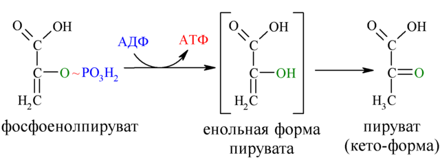 File:Reaction-PEP-Pyruvate.png - Wikimedia Commons