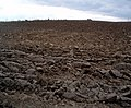 Recently ploughed field at Ardestie - geograph.org.uk - 556468.jpg