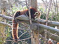 Red Panda at Dublin Zoo2.jpg