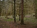 Reelig Glen - geograph.org.uk - 284921.jpg