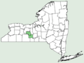 Rhodiola integrifolia ssp leedyi NY-dist-map.png