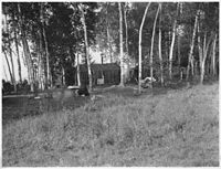 Rice shacks on Big Rice Lake, Aitken County, Minnesota - NARA - 285209.jpg