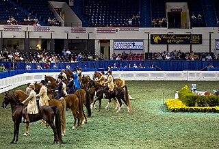Kentucky State Fair Worlds Championship Horse Show
