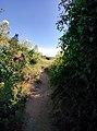 Rock-cornwall-england-tobefree-20150715-165307.jpg