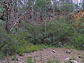 Rock Quarry, Lakes Discovery Trail, 803.2009.jpg