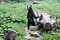 Romania bear (44110306782).jpg