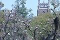 Rookery Audubon Park NOLA.jpg