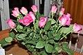 Rosales - Rosa cultivars - 5.jpg