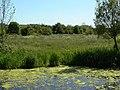 Rough grazing near Attenborough - geograph.org.uk - 1338365.jpg