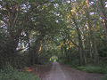 Route of a Roman road through Chilworth towards Bassett - geograph.org.uk - 26860.jpg
