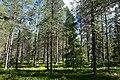 Rovaniemi, Finland (17) (36685389895).jpg