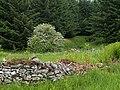 Ruined sheepfold, Old Howpasley - geograph.org.uk - 467178.jpg