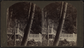 Rustic stairs, by Conkey, G. W. (George W.), 1837-ca. 1900.png
