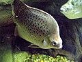 Ryby v ZOO (3).jpg
