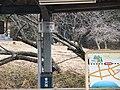Ryori station 2012.3.18 - panoramio (5).jpg
