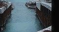 S W canal exit. Big fish. Inagua (24005550017).jpg