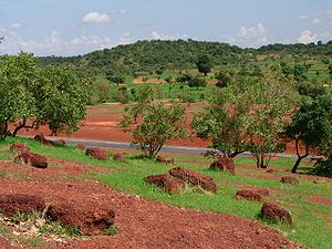 Sahel - The lush green of the rainy season Sahelian forest, along the Bamako-Kayes Road in Mali. The trees in the foreground are acacia. Note the large baobab tree.