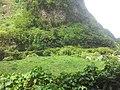 Salazie - panoramio.jpg