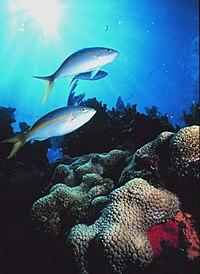 Sanc0201 - Flickr - NOAA Photo Library.jpg