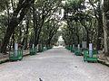 Sando of Miyazaki Shrine.jpg