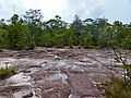 "Sandstone Plateau with ""fire padang"" vegetation (15767588752).jpg"