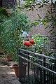 Scarlet Ibises (31791521880).jpg