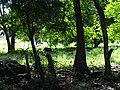 Scenery around Balgue - Ometepe Island - Nicaragua - 01 (30941187863).jpg