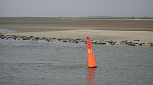 Gat (landform) - Common seals and Grey seals on the western shore of the Wichter Ee, a gat between Norderney and Baltrum