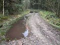 Seventy Acre Wood - Waterlogged Footpath - geograph.org.uk - 642328.jpg