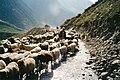 Shimla british.jpg