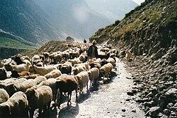 Shimla british