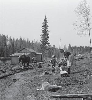 Evacuation of Finnish Karelia - An evacuee family resettled in Southern Finland, toiling on the field.