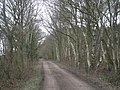 Silver Birches at Shawbury Heath - geograph.org.uk - 701892.jpg