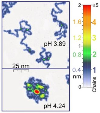 Single-molecule experiment - Image: Single Molecule Under Water AFM Tapping Mode