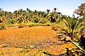 Siwa Oasis, Qesm Siwah, Matrouh Governorate, Egypt - panoramio (18).jpg