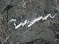 Slightly magnetitic argillite interbed in banded iron formation (Temagami Iron-Formation, Neoarchean, ~2.736 Ga; Temagami North roadcut, Temagami, Ontario, Canada) 13 (40849050023).jpg