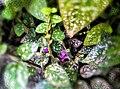 Small Is Beautiful Purple Flower (255567573).jpeg