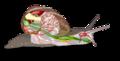 Snail diagram-ar edit1.png