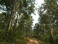 Snap during safari in Wayanad Wildlife Sanctuary 9853.JPG