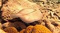 Snorkeling Front Porch, Bonaire (12841152914).jpg