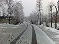 Snow Fall 2010.jpg
